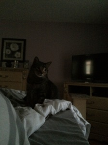 I wake up to this x4 every morning. Someone is not pleased that breakfast was delayed.