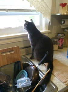 Now we are crossing the lines. On the counter, bird watching.